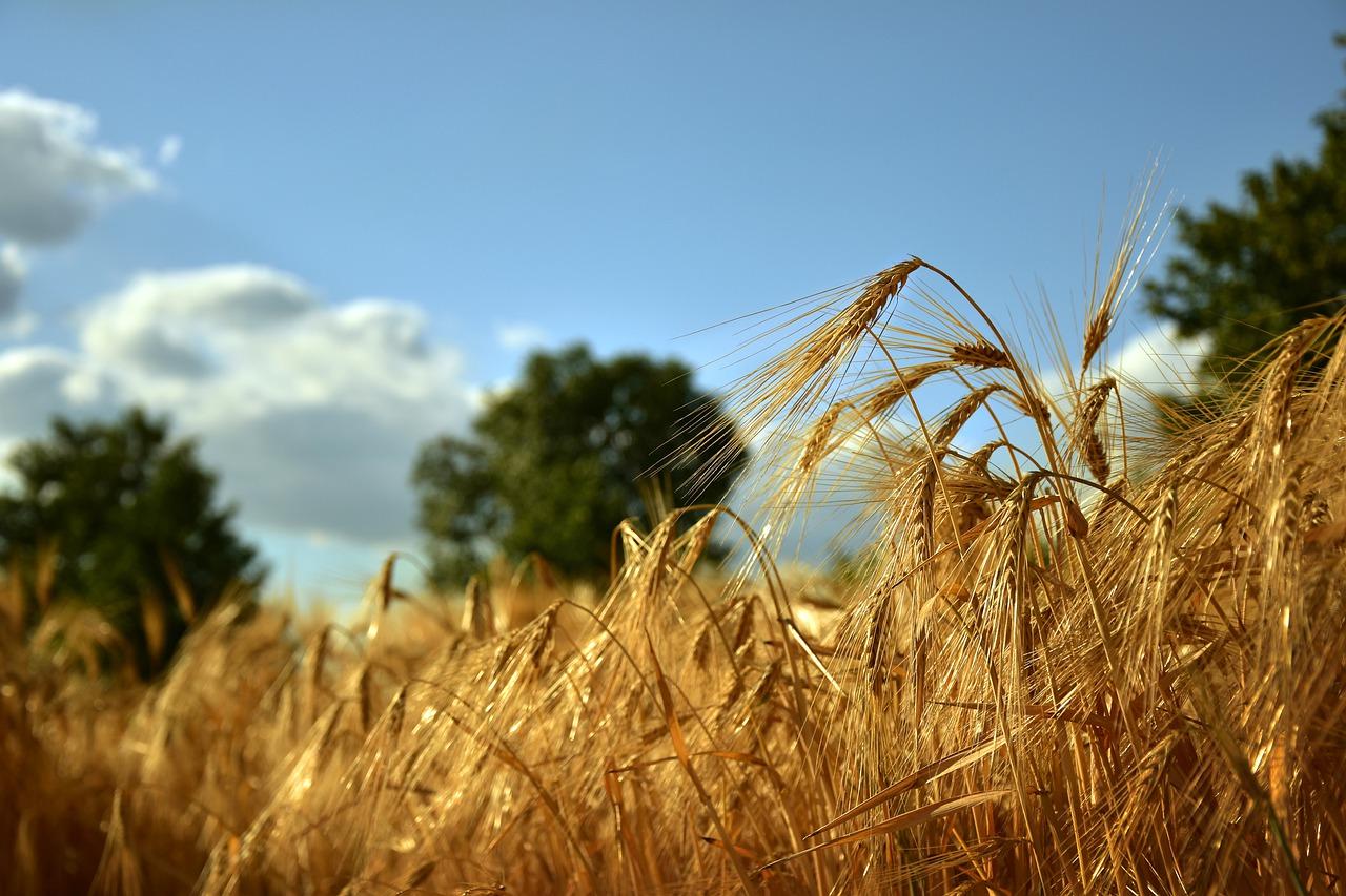 Oferta hal rolniczych całorocznych