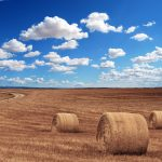 Przygotowanie hal rolniczych